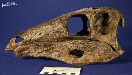 stegosaurus_DSC_9833.JPG