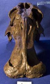edmontosaurus_DSC_1026.JPG