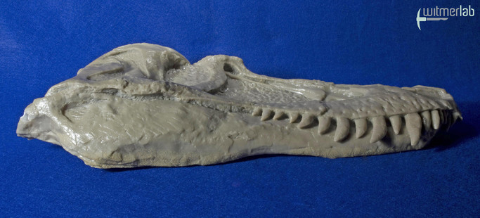 gorgosaurus_DSC_8563.JPG