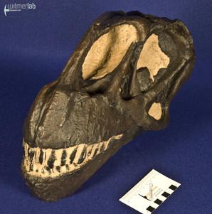 camarasaurus_DSC_9043.jpg