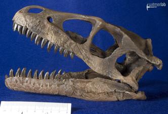 Dromaeosaurus_DSC_8488.JPG