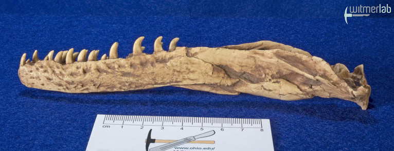 velociraptor_gaston_DSC_8124.JPG