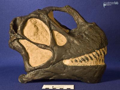 camarasaurus_DSC_9014.jpg