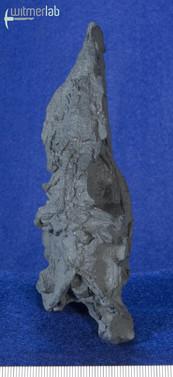 eoraptor_DSC_7554.JPG