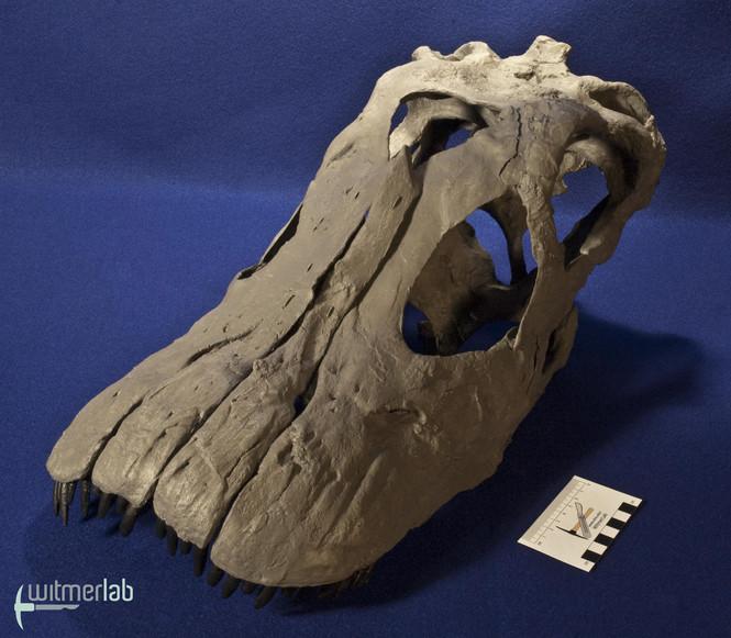 apatosaurus_DSC_1777.JPG