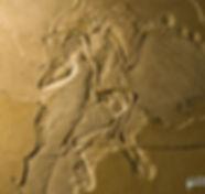 archaeopteryx_DSC_8270.JPG