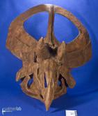 zuniceratops_DSC_2604.JPG