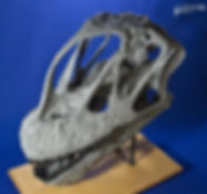 camarasaurus_DSC_2527.JPG