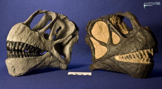 camarasaurus_DSC_9005.jpg
