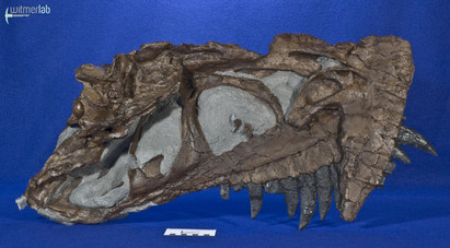 ceratosaurus_DSC_2326.JPG