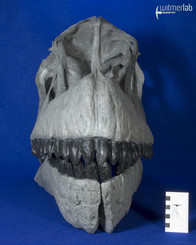 Camarasaurus_grandis_DSC_0458.jpg