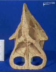 protoceratops_DSC_0689.jpg