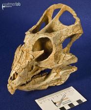 archaeoceratops_DSC_1372.JPG