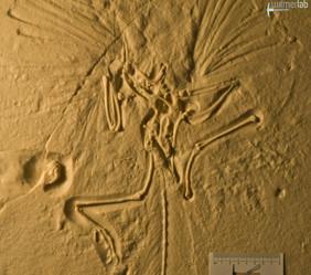 archaeopteryx_lith_DSC_8007.JPG