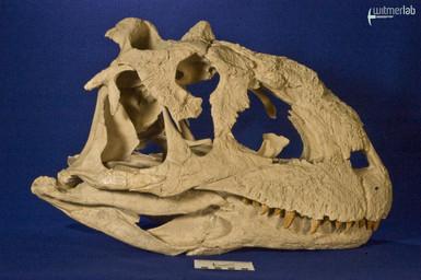 majungasaurus_DSC_9430.JPG