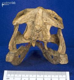 Velociraptor_Sculpture_DSC_8154.JPG