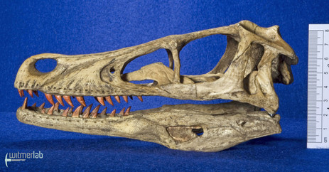 Velociraptor_Sculpture_DSC_8132.JPG