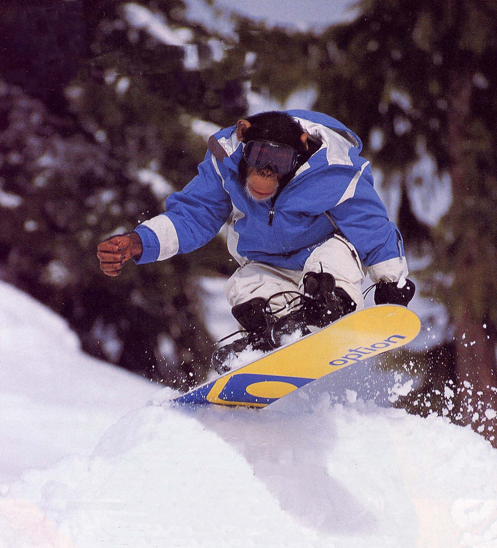 A monkey riding a snowboard.  Knuckle draggers need BOARD BOOTIE, a snowboard cover and snowboard carrier.
