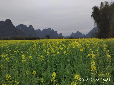 Spring is coming! Everywhere in Guilin is becoming green! The mountains are surrounded by beautiful