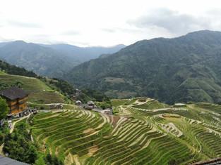 The Longji Rice Terrace! Always beautiful!