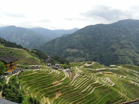 The Longji Rice Terrace!  Always beautiful!