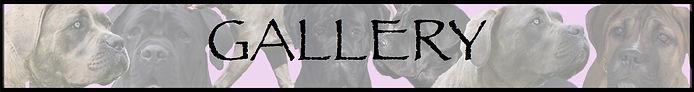 GALLERY TITLE.jpg