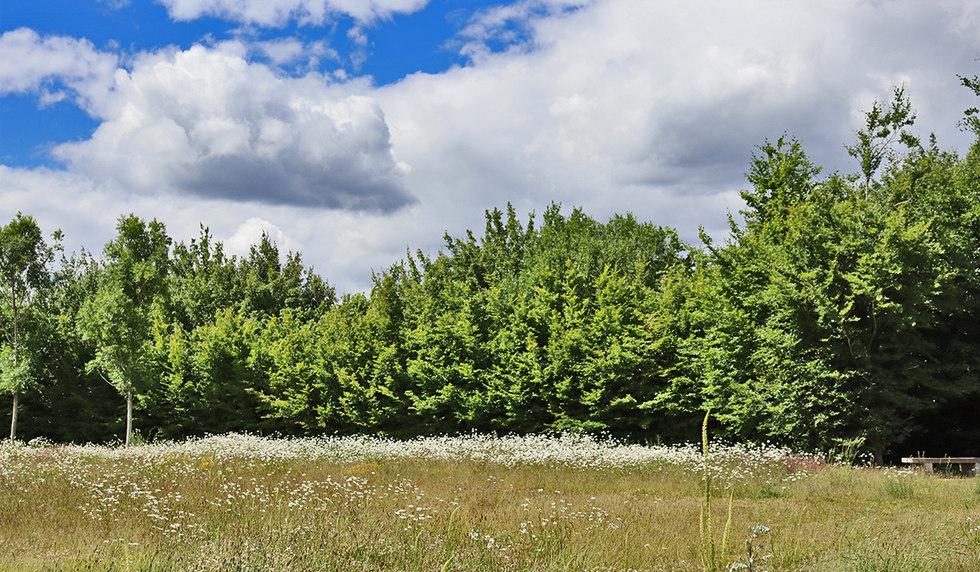 Sherbourne Fields, Basingstoke