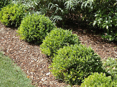 CAN I PLANT TREES & SHRUBS IN WINTER?