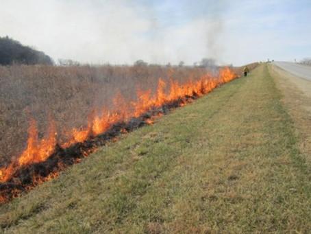 Iowa's Fiery Forests