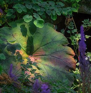 12-Keith-Mounts-Fairy-Bed-photograph.jpg