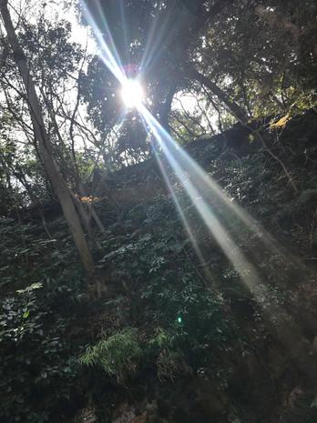 朝の光、ありがとう