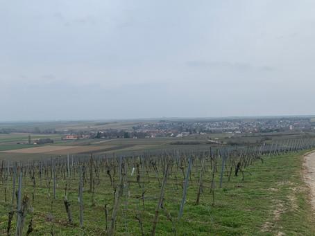 Westhofen's Top Vineyards in Rheinhessen