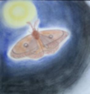 papillon de nuit.jpg