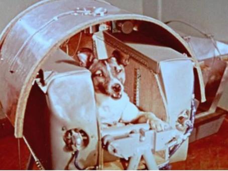 Día del Perro Callejero: 5 perros sin hogar que han hecho historia