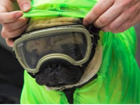 Harley, el perrito terapeuta que alivia el estrés del personal médico que atiende Covid-19