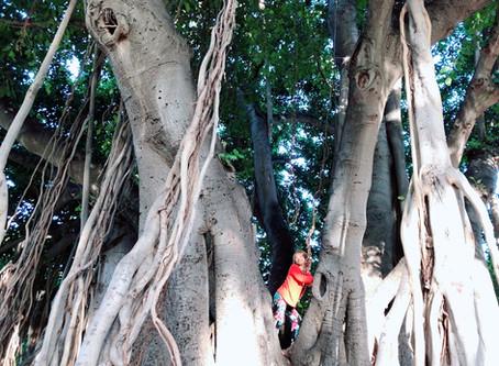 JaneHAWAIIでターザンになる沢山の自然からパワーを頂き凄いエネルギーチャジをしちゃいました❤️