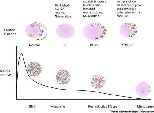 https://www.cell.com/trends/endocrinology-metabolism/fulltext/S1043-2760(16)30027-3