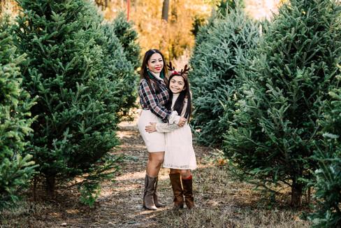 Holiday Mini Tree Farm-2.jpg