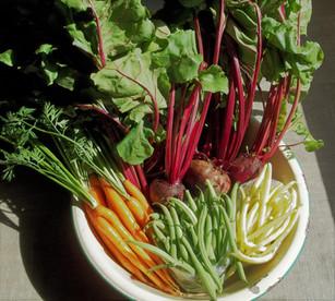 Bowl of fresh produce Aug 10, 2019.JPG