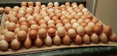 Three days of eggs Jun 27 2016.jpg