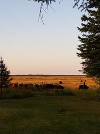 View across back lawn - Aug 31, 2019.jpg