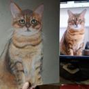 Custom Pet Portrait   Oil Pastel   on ETSY