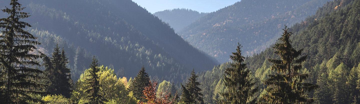 Panoramabild Bäume und Berge