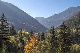 Stromy a hory