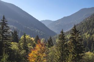 Drzew i gór