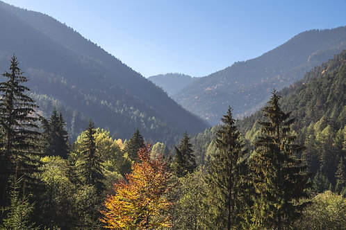 100 Trees per Month - Offset 20 Tons of Carbon Every Month