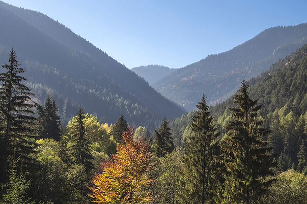 Over looking mountains of forest