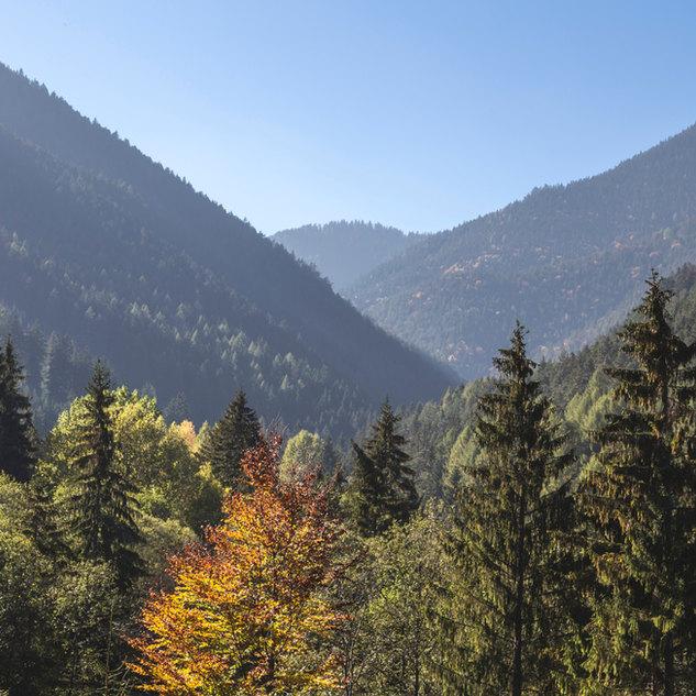 Les arbres et les montagnes