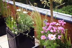 Planting Schemes - North London