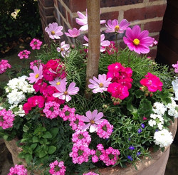 Container planting - North London